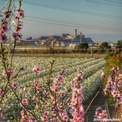 Primavera a Lleida